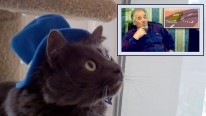 Cats React to Elders Reacting to Happy Tree Friends